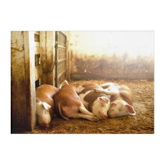 Art Mural En Acrylique Porcs se blottissants des images | de Getty