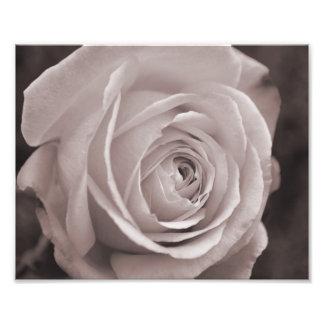 Art noir et blanc de mur de photo du rose 10x8