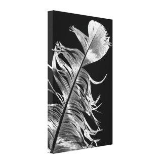 Art noir et blanc de plume de photographie toile