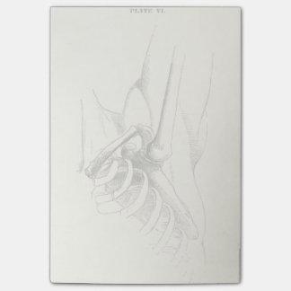 Articulation de l'épaule vintage de l'anatomie | post-it®