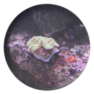Assiette Corail mou coloré et roches vivantes