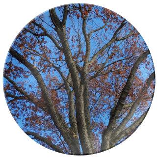 Assiette En Porcelaine Chêne dans un ciel bleu d'automne -