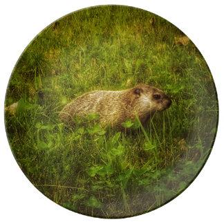 Assiette En Porcelaine Groundhog dans un plat de porcelaine de champ