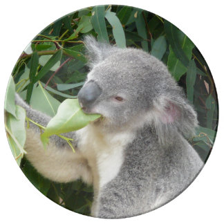 Assiette En Porcelaine Koala mangeant la feuille de gomme