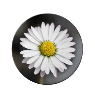 Assiette En Porcelaine Marguerite sauvage blanche et jaune