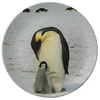 Assiette En Porcelaine Océan antarctique d'oiseaux de plage de neige de