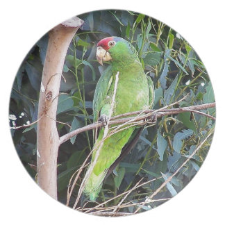 Assiette Faune sauvage d'animaux d'oiseaux de perroquet