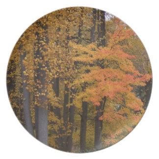 Assiette La chute laisse des plats de dîner d'arbres de