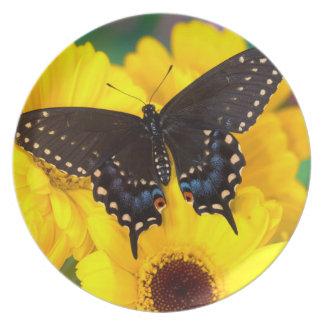Assiette Papillon noir de machaon