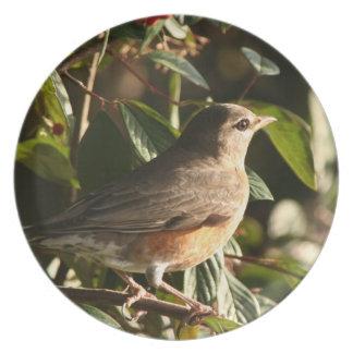 Assiette Photographie d'animal de faune d'oiseau de Robin