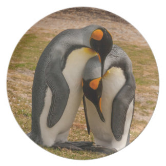 Assiette Pingouins de roi caressant, les Malouines