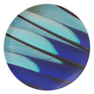 Assiette plumes Bleu-gonflées de rouleau