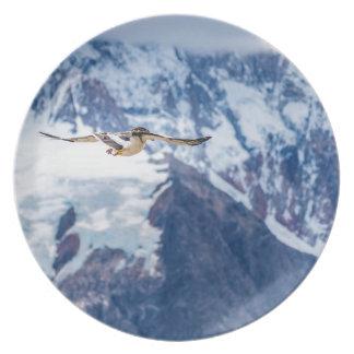 Assiette Vol Patagonian austral d'oiseau