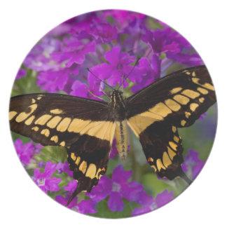 Assiettes En Mélamine Dessus d'un papillon de machaon