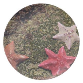 Assiettes En Mélamine Étoiles de mer vivantes (4).JPG