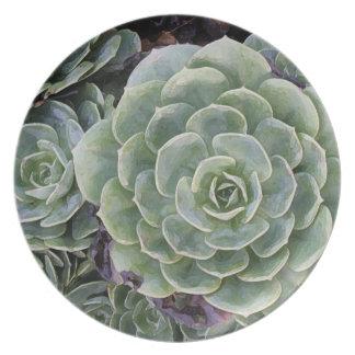 Assiettes En Mélamine Jardin de cactus