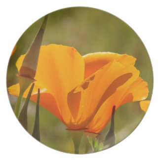 Assiettes En Mélamine Le fleur sauvage de pavot de Californie fleurit le