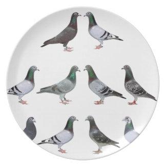 Assiettes En Mélamine Pigeons voyageur champions