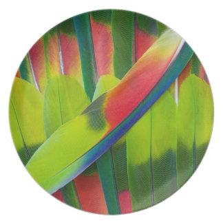 Assiettes En Mélamine Plumes vertes de perroquet d'Amazone