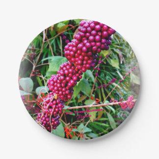 Assiettes En Papier Américain Beautyberry aux jardins la Floride de