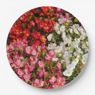 Assiettes En Papier Bégonias de cire colorés
