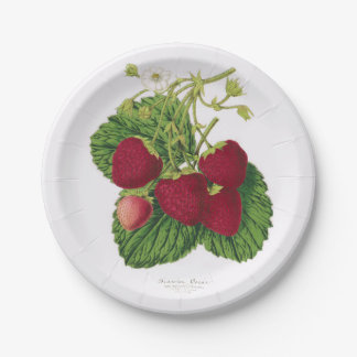 Assiettes En Papier Plaque à papier de pique-nique antique de fraise