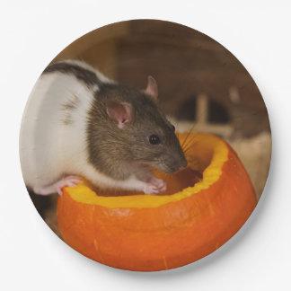 Assiettes En Papier rat à capuchon noir effrayant mangeant des graines