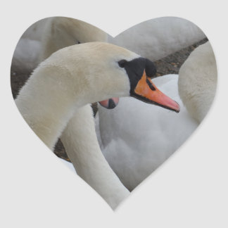 Autocollant blanc de coeur de cygne