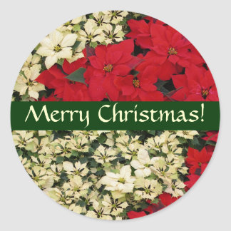 Autocollant blanc et rouge de Noël de poinsettias