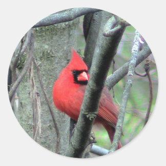 Autocollant cardinal masculin de photo