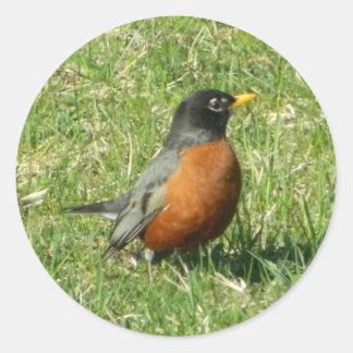 Autocollant de Nord-américain Robin