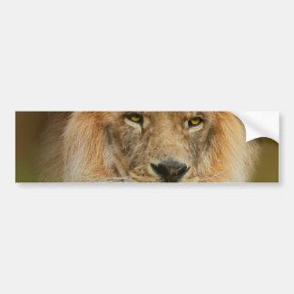 Autocollant De Voiture Fin majestueuse de lion de l'Afrique du Sud