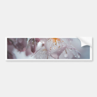 Autocollant De Voiture Fleurs de cerisier japonaises après les pluies