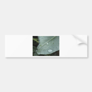 Autocollant De Voiture Gouttes de pluie sur le feuille de chou-fleur