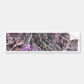 Autocollant De Voiture Herbes sauvages australiennes indigènes en fleur