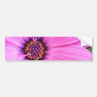 Autocollant De Voiture Nature pourpre rose florale de fleur de marguerite