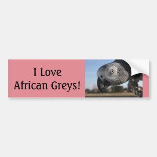 Autocollant De Voiture Perroquet curieux de gris africain du Congo