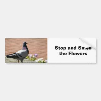Autocollant De Voiture Photographie de pigeon