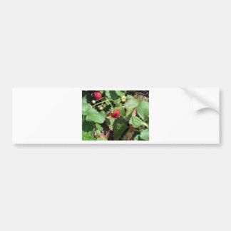 Autocollant De Voiture Plan rapproché des fraises organiques fraîches