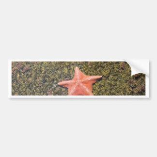 Autocollant De Voiture starfish.JPG vivant