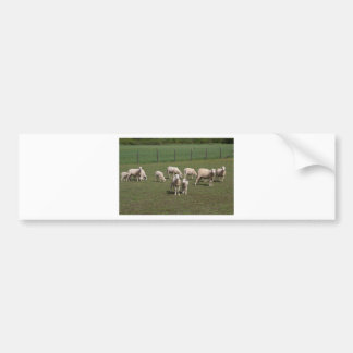 Autocollant De Voiture Troupeau de moutons