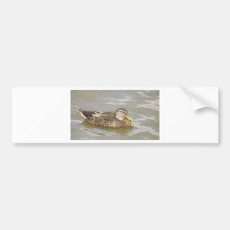 Autocollant De Voiture Une natation de canard sauvage