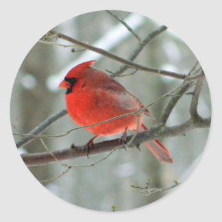 Autocollant (masculin) cardinal rouge