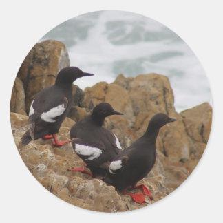 Autocollants de guillemots de pigeon