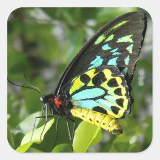 Autocollants de papillon