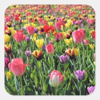 Autocollants de tulipes