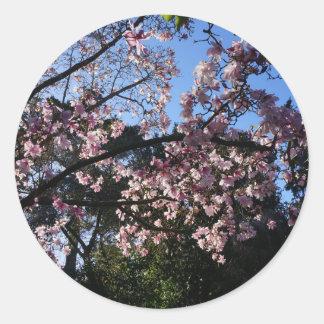 Autocollants du dawsoniana #2 de magnolia