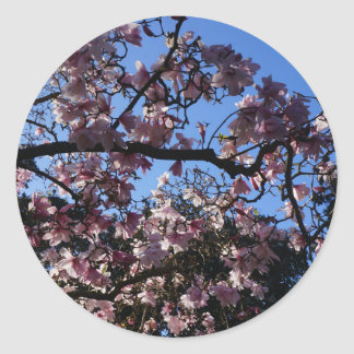 Autocollants du dawsoniana #3 de magnolia