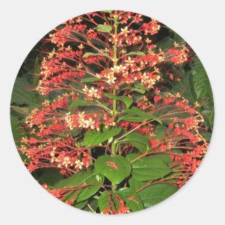 Autocollants fleuris assez rouges de plante