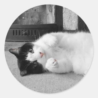 Autocollants roses de photo de chat de nez